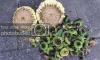 sunflower%20heads.png