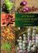 Australian_Succulent_Plants.jpg