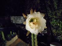 post-4664-0-23462200-1451717775_thumb.jp