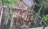post-13830-0-64579100-1402838582_thumb.j