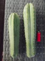 post-5030-0-73588400-1434433097_thumb.jp