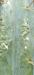 cactus3.thumb.png.04d598519215def8097e56ea77a73fe7.png