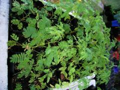 Exotic Leafy Plants