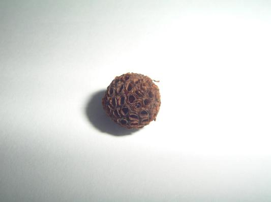 Kratom Seed Pod 2