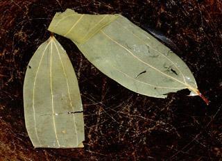 Tej patta / Tej patra / Indian bay leaf