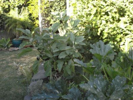 garden north1.JPG