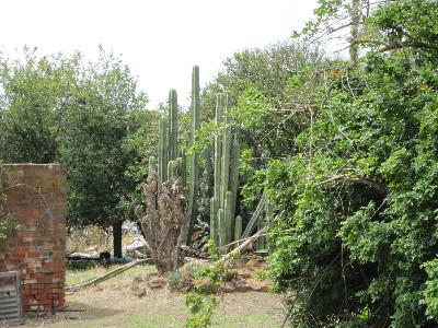 cactus farm 1
