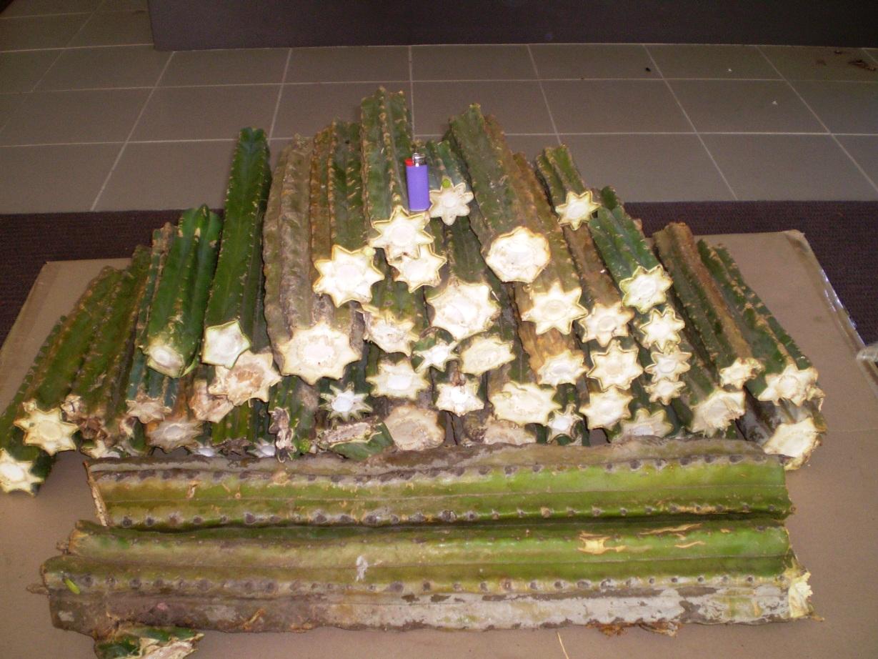 cactus mounds