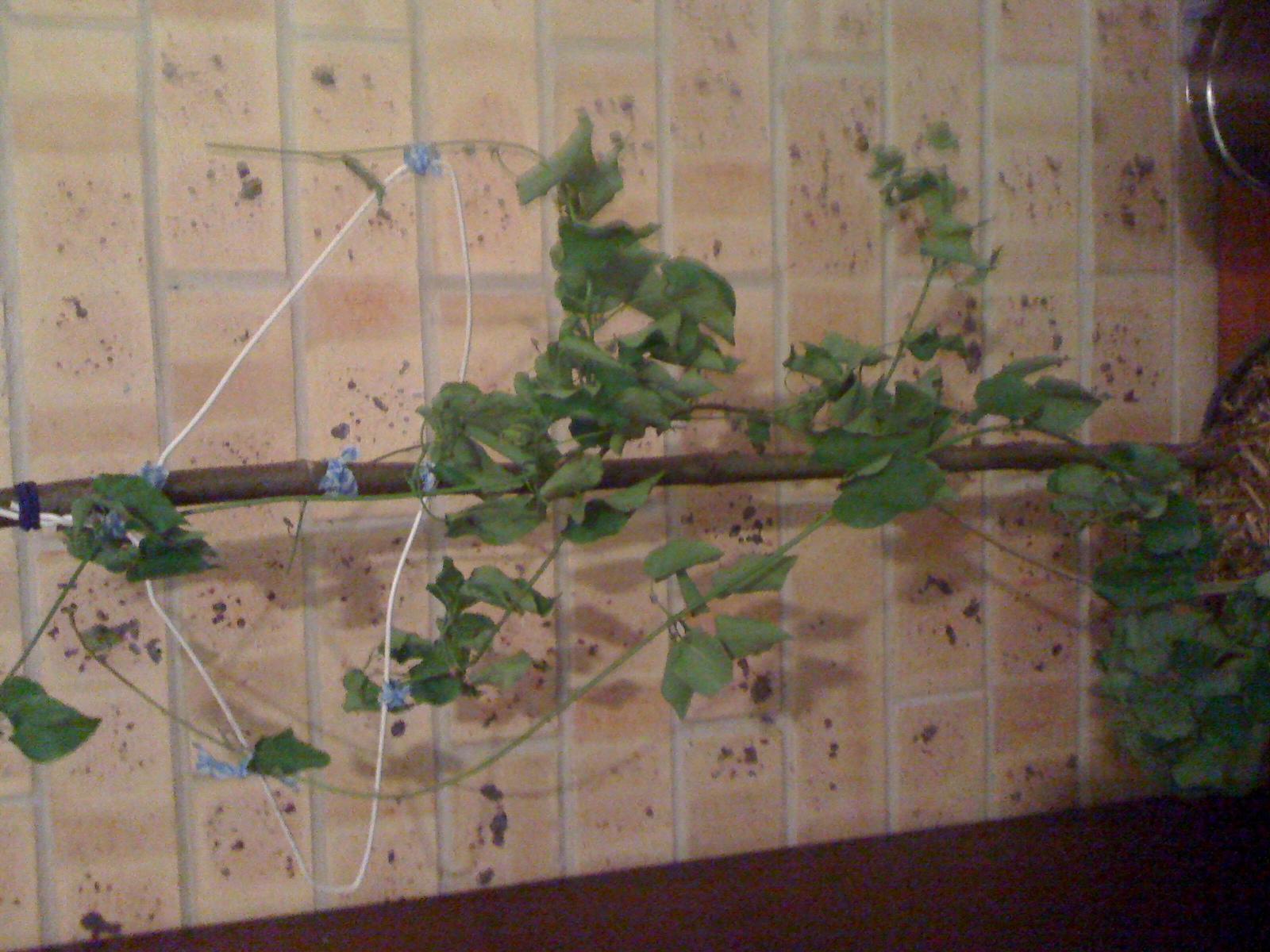 late 09 seedling