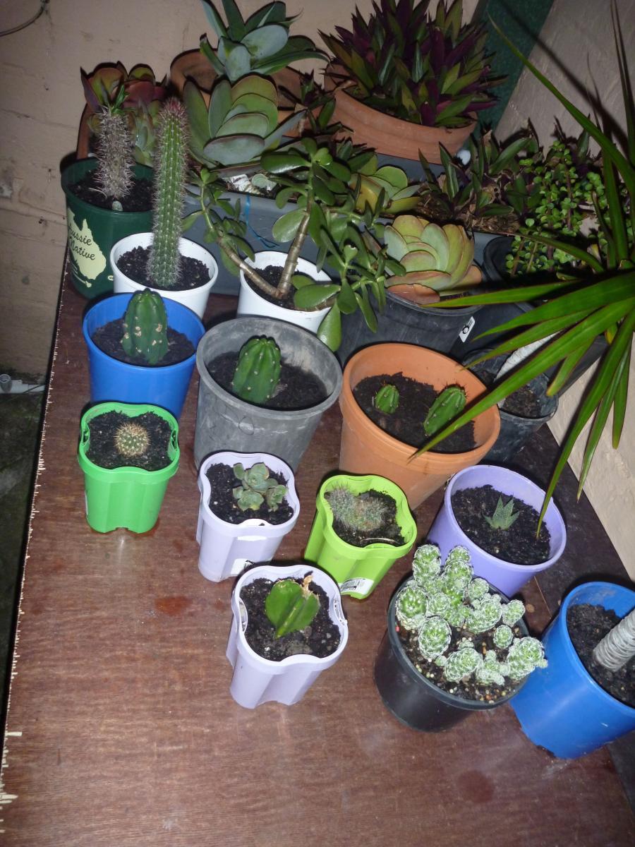 Succulent corner