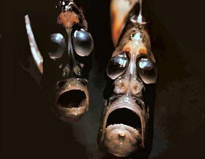 odd-looking-marine-animals[1].jpg