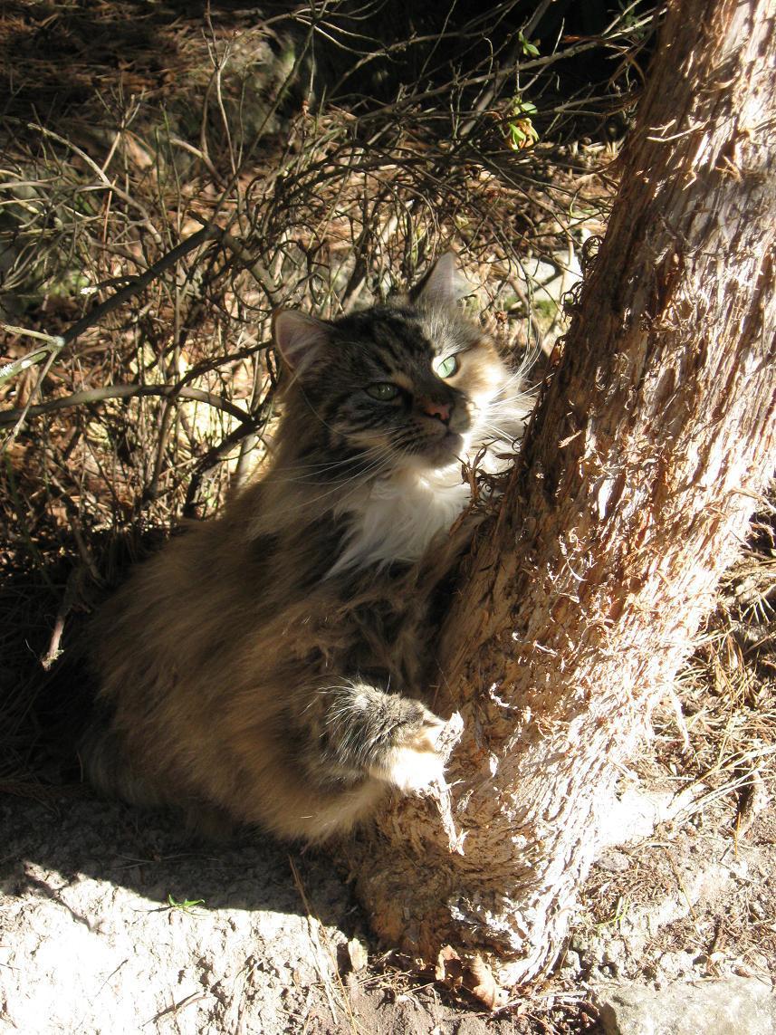treehugger bog