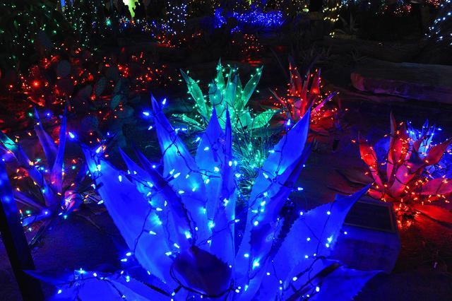 Ethel M Botanical Cactus garden 102.jpg