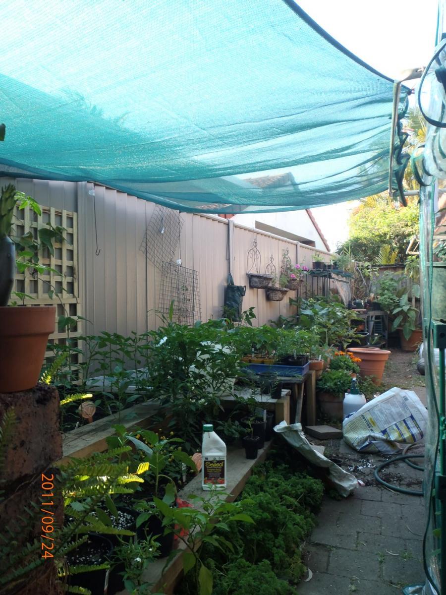 My Garden Spring 2011