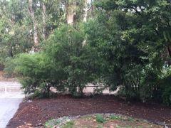 floribunda smaller
