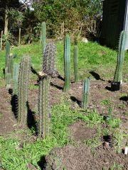 Cactus Garden August 2013 VI