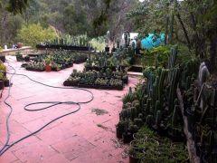 plant sale jan14