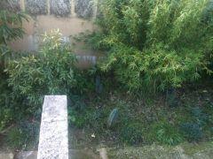 garden21 6 2012