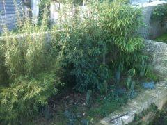 garden21 6 2012 2of3