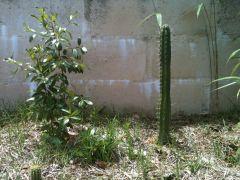gardenpre2011