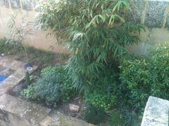 garden21 6 2012 3of3
