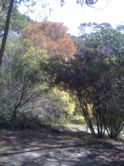 Bush Colour