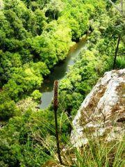 Sunshine Coast Obi Obi Creek