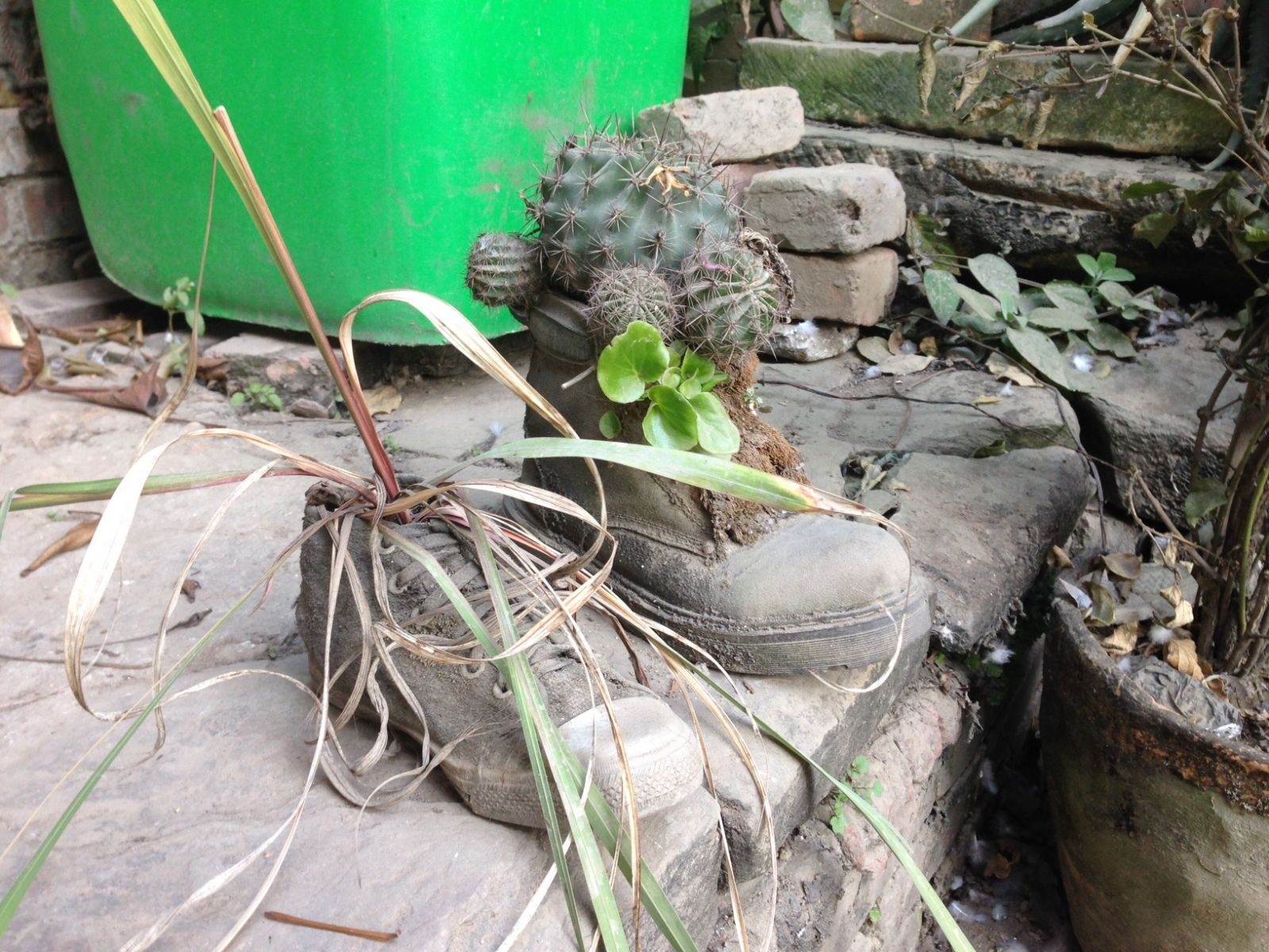 These boots were made for... cacti?!