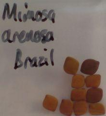Mimosa arenosa seeds