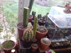 spilling over from the windowsill