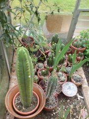 cactuscenea spring 2013