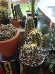 new cacti