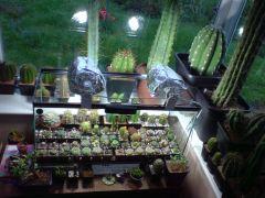 Cactus corner