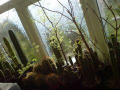 rain on a sunshiney day