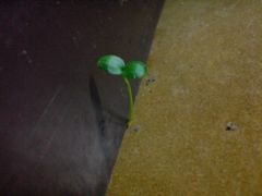 crazy random seedling growing out from the floor