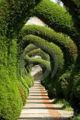 Walkway in plants