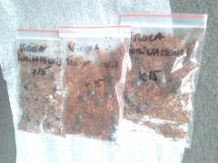 22 march 2016 Hopefully real live fresh virola surinamensis seeds but with a french postmark which is partly worrying because of those cunts who sell old dead dry unviable V' sebifera seeds over there (ethnoplantes)