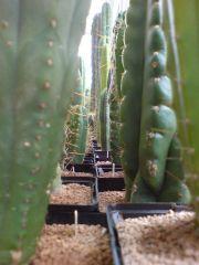 cactus forest
