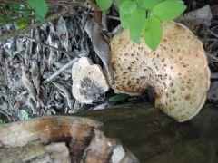 Coexisting Fungi