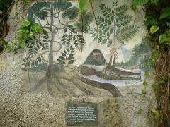 The Origin of Ayahuasca and Chacruna