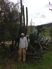 Cactus patch score