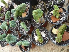 cacti 2016 photos
