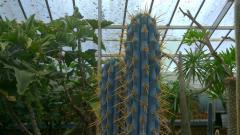 Blue & spiny