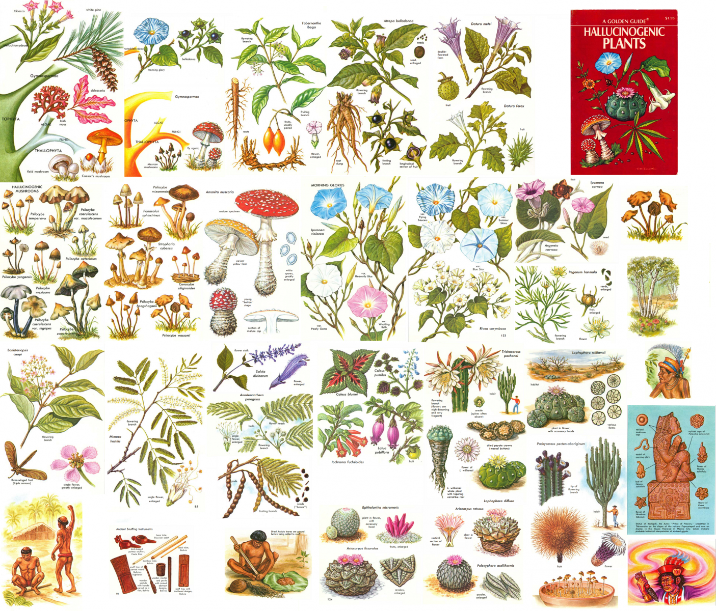 A Golden Guide to Hallucinogenic Plants