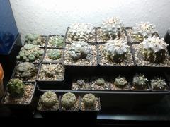 winter hideout