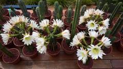 ballsdeep botanicals