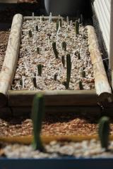 seedling bed.JPG