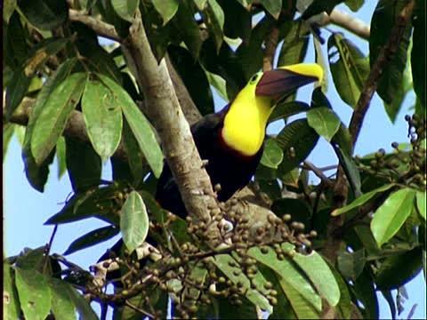 Virolador and The Lightening Tree